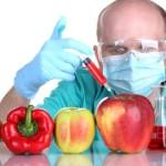 Над какими продуктами питания работают сегодня генетики?