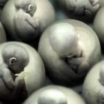Британские ученные собираются менять гены в эмбрионах человека.